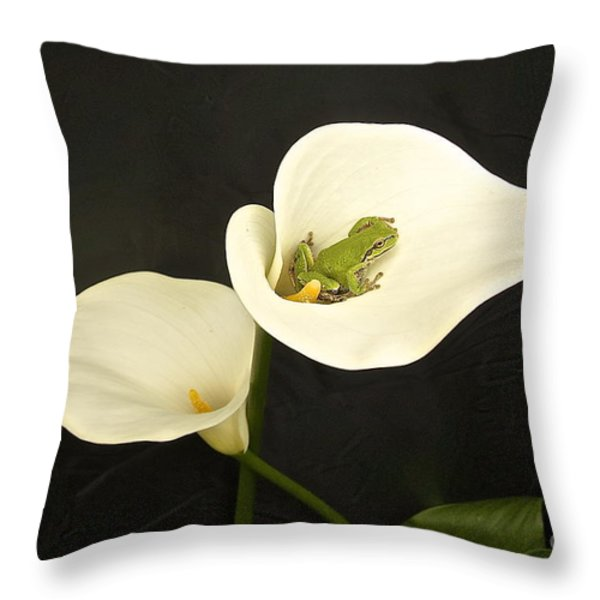 Pacific Tree Frog Throw Pillow by Sean Griffin