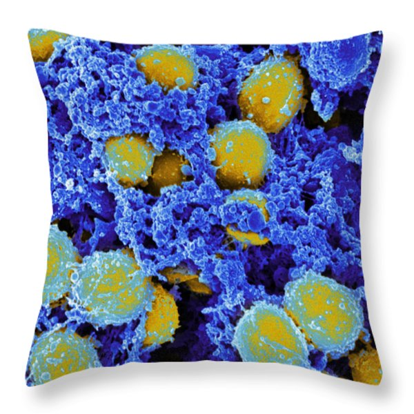 Staphylococcus Aureus Bacteria Sem Throw Pillow by Science Source