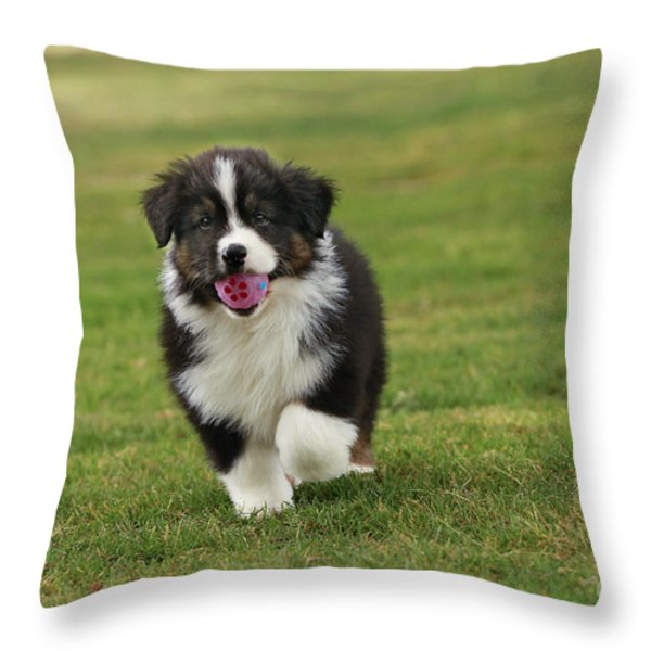 Australian Shepherd Puppy Throw Pillow by Jean-Michel Labat