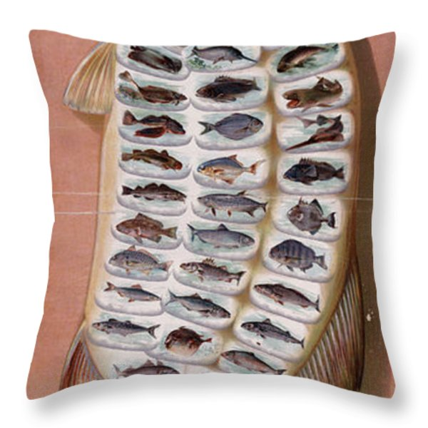 50 Fish from American Waters Throw Pillow by Nomad Art And  Design