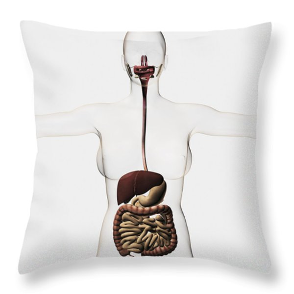 Medical Illustration Of The Human Throw Pillow by Stocktrek Images