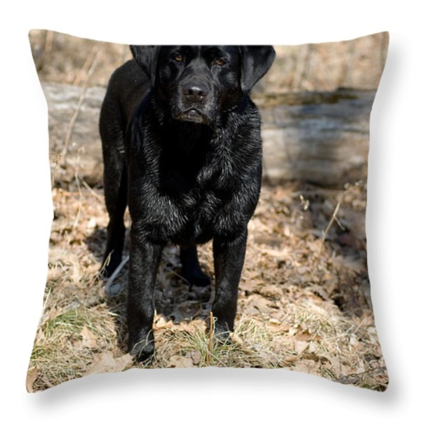 Black Labrador Retriever Throw Pillow by Linda Freshwaters Arndt