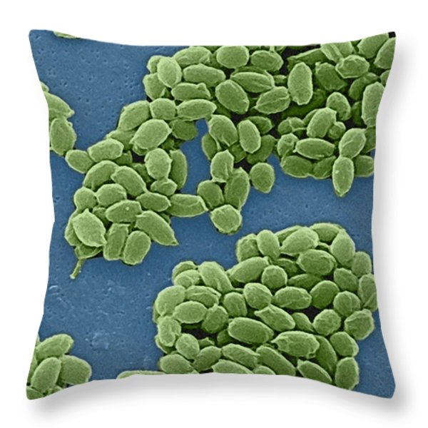 Anthrax Bacteria Sem Throw Pillow by Science Source
