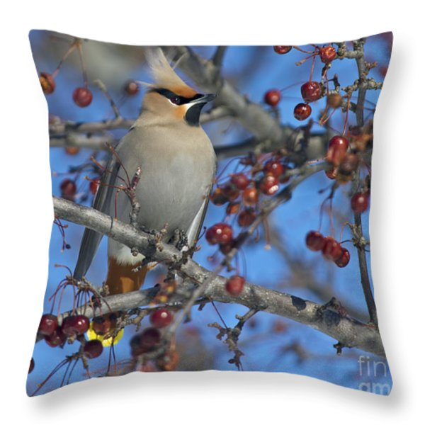 A Bird For Its Crest.. Throw Pillow by Nina Stavlund