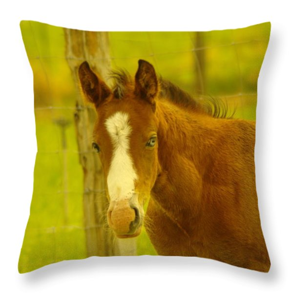 A BLUE EYED COLT Throw Pillow by Jeff  Swan