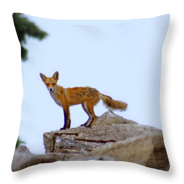 A Fox On The Rocks Throw Pillow by Kay Novy