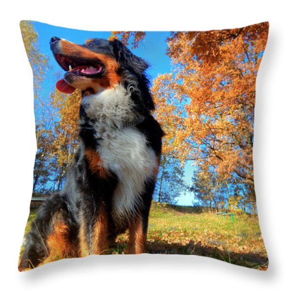 A Happy Bernese Mountain Dog Outdoors Throw Pillow by Michal Bednarek