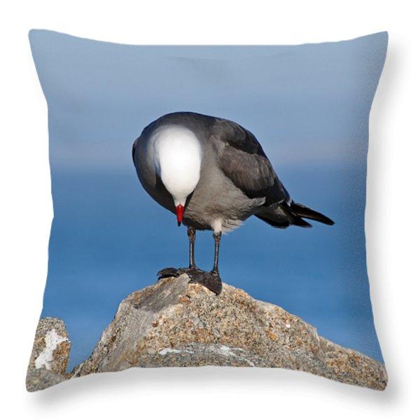 A Heermann's Gull Investigates Throw Pillow by Susan Wiedmann