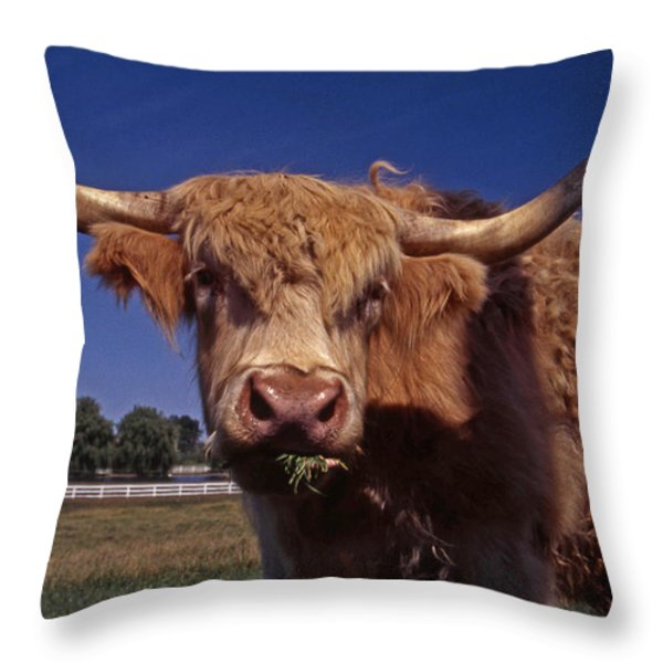 A LOT A BULL Throw Pillow by Skip Willits