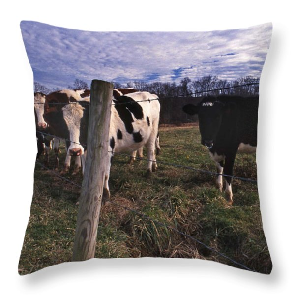 A LOT OF BULLS Throw Pillow by Skip Willits