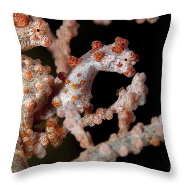 A Pair Of Pygmy Seahorse On Sea Fan Throw Pillow by Steve Jones
