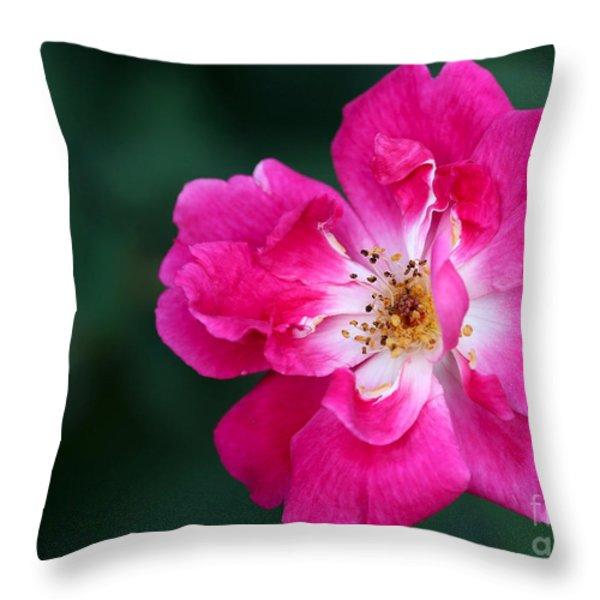 A Pretty Pink Rose Throw Pillow by Sabrina L Ryan