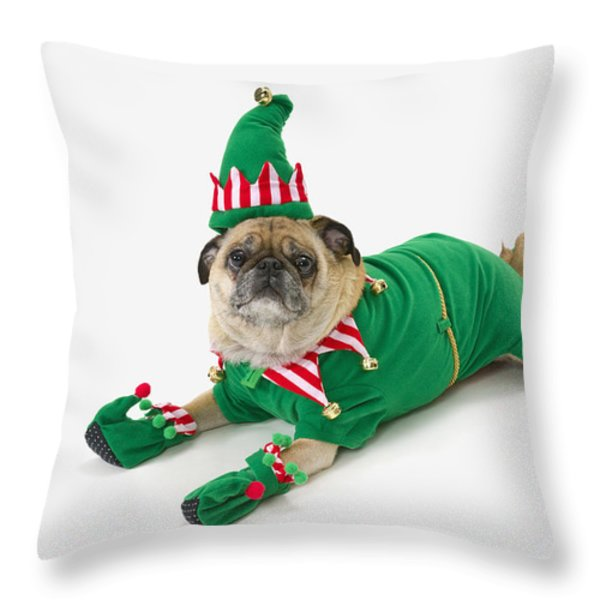 A Pug In A Christmas Elf Costumest Throw Pillow by Corey Hochachka