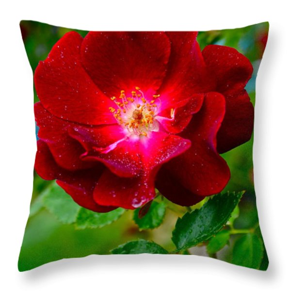 A Rose Is A Rose Throw Pillow by Frozen in Time Fine Art Photography
