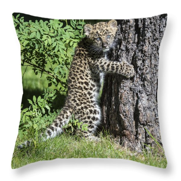 A Whole New World Throw Pillow by Sandra Bronstein