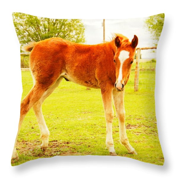 A YOUNG FOAL Throw Pillow by Jeff  Swan