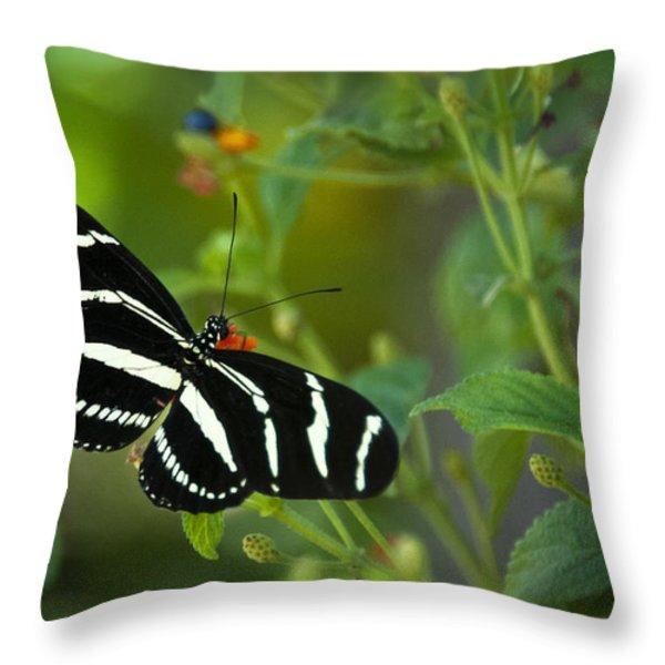 A Zebra Longwing Butterfly  Throw Pillow by Saija  Lehtonen