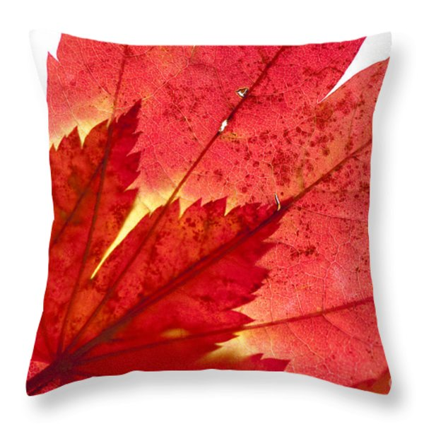 Acer From Beneath Throw Pillow by Anne Gilbert