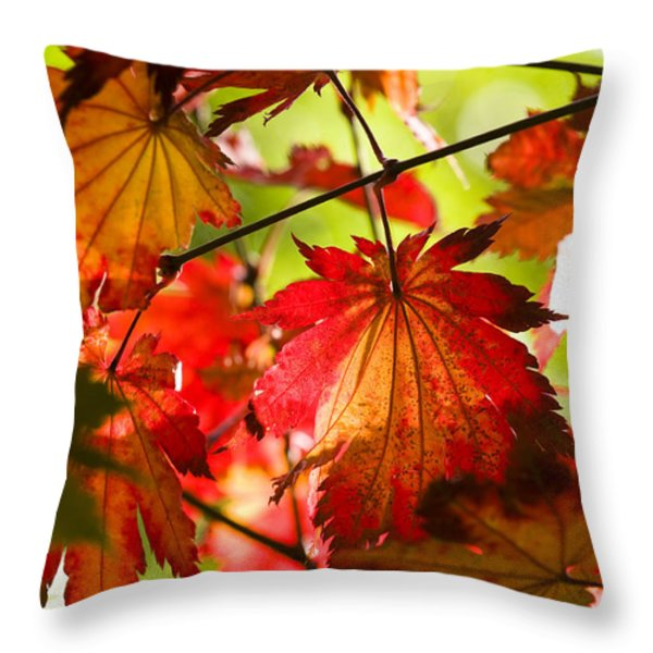 Acer Japonicum O Isami Throw Pillow by Anne Gilbert