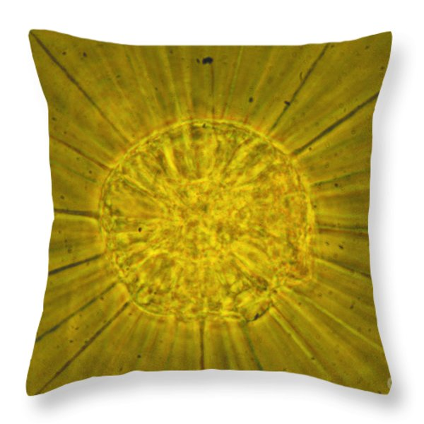 Actinophrys Sol Lm Throw Pillow by James W Evarts