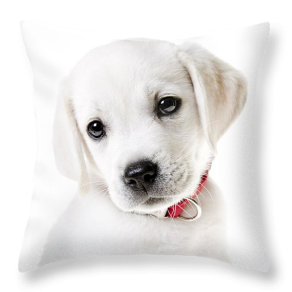 Adorable Yellow Lab Puppy Throw Pillow by Diane Diederich