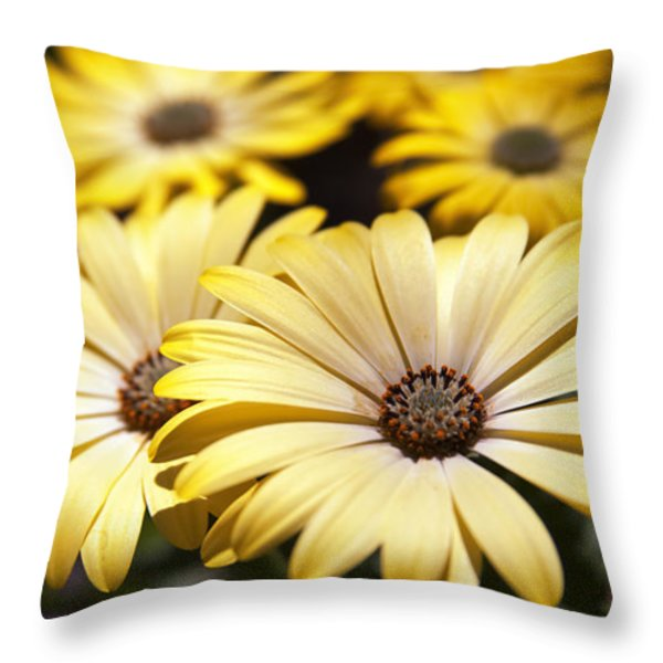 African Daisies Throw Pillow by Caitlyn  Grasso