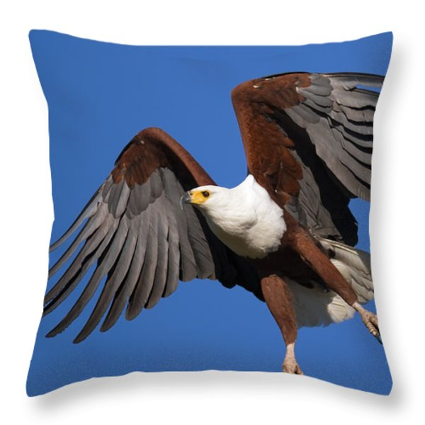 African Fish Eagle Throw Pillow by Johan Swanepoel
