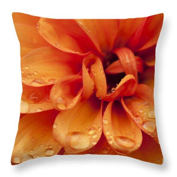 After The Rain Throw Pillow by Anne Gilbert