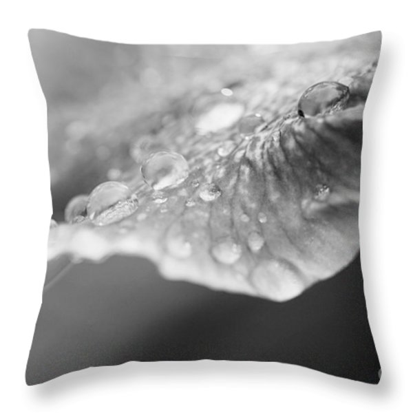 After The Rain Throw Pillow by Erin Johnson