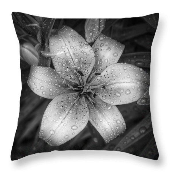 After the Rain Throw Pillow by Scott Norris