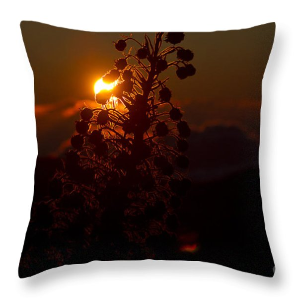 Ahinahina - Silversword - Argyroxiphium Sandwicense - Sunrise On The Summit Haleakala Maui Hawaii  Throw Pillow by Sharon Mau