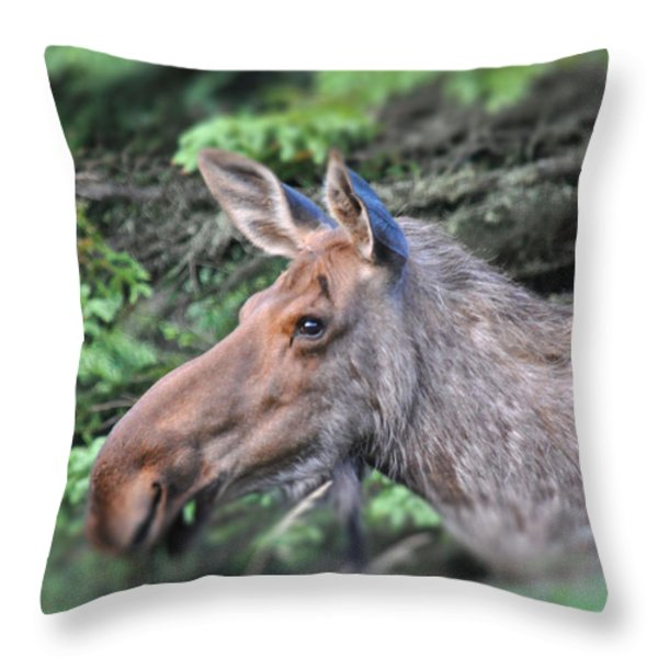 Alaska Moose Throw Pillow by Debra  Miller
