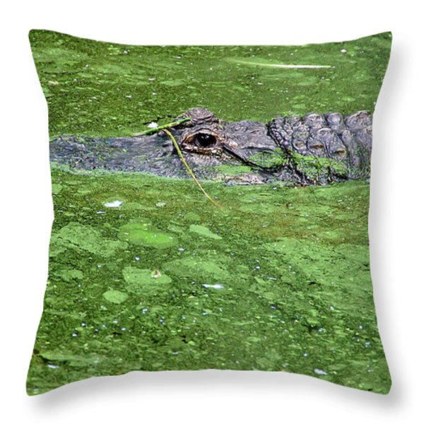 Alligator In Swamp Throw Pillow by Aimee L Maher Photography and Art