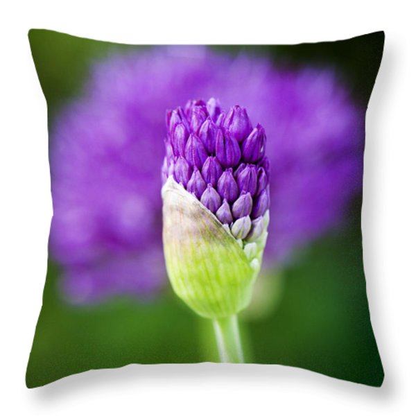 Allium hollandicum Purple Sensation Throw Pillow by Tim Gainey