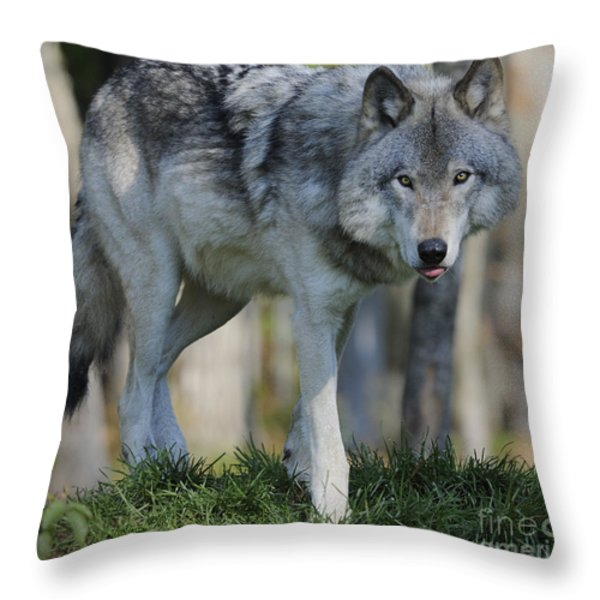 Alpha... Throw Pillow by Nina Stavlund