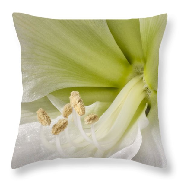 Amaryllis Throw Pillow by Adam Romanowicz