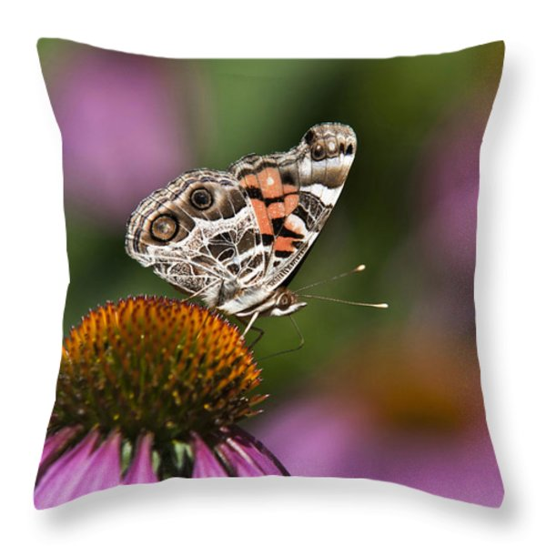 American Painted Lady Butterfly Throw Pillow by Christina Rollo