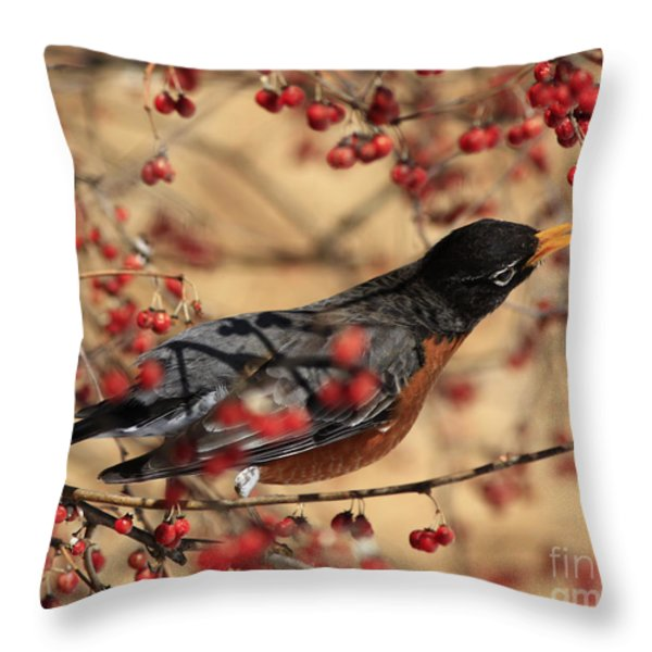 American Robin Eating Winter Berries Throw Pillow by Inspired Nature Photography By Shelley Myke
