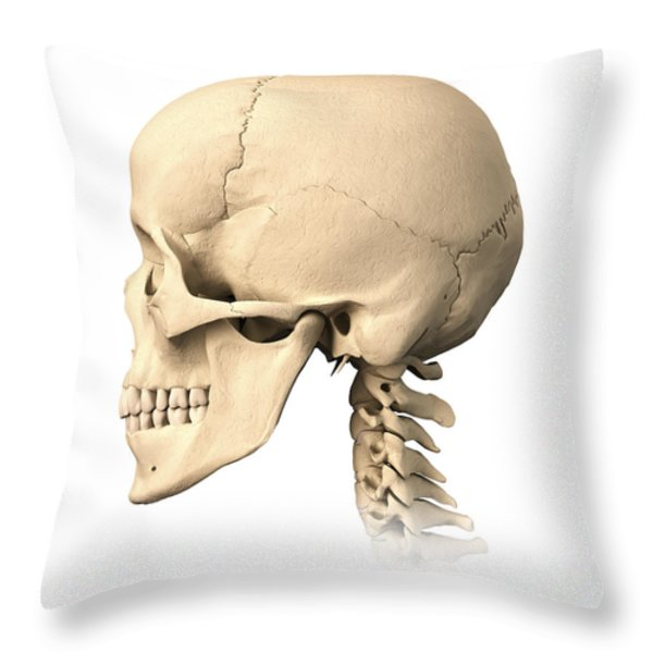 Anatomy Of Human Skull, Side View Throw Pillow by Leonello Calvetti