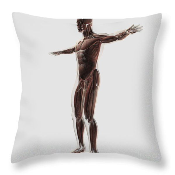 Anatomy Of Male Muscular System, Side Throw Pillow by Stocktrek Images