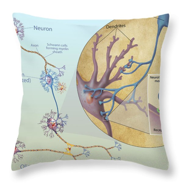 Anatomy Of Neurons Throw Pillow by Carlyn Iverson