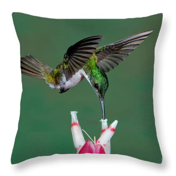 Andean Emerald Hummingbird Throw Pillow by Anthony Mercieca