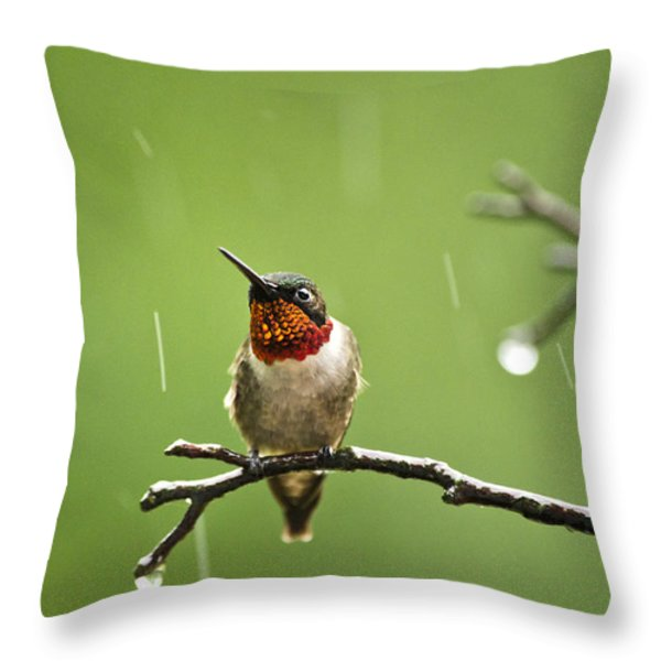 Another Rainy Day Hummingbird Throw Pillow by Christina Rollo