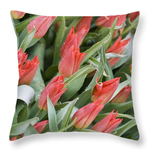 Anticipation Throw Pillow by Juli Scalzi