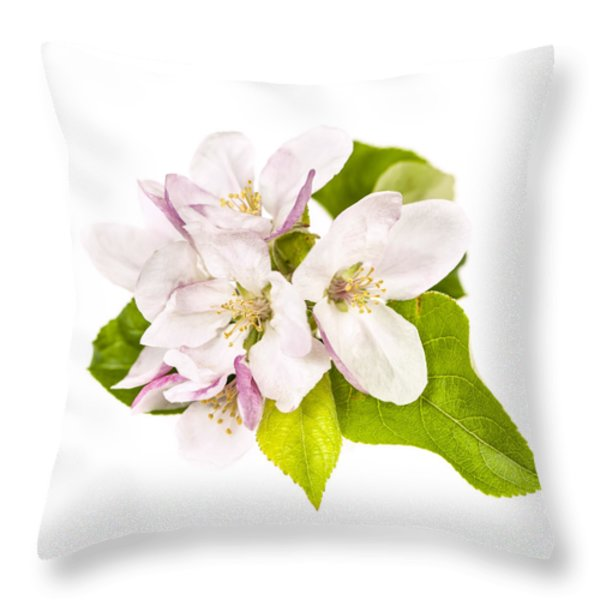 Apple blossom Throw Pillow by Elena Elisseeva