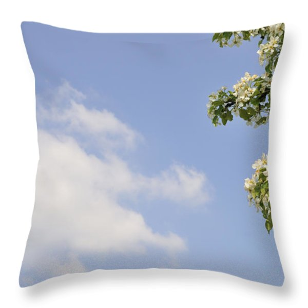 Apple blossom in spring blue sky Throw Pillow by Matthias Hauser