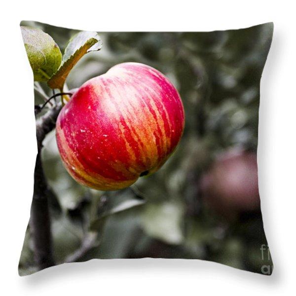 Apple Throw Pillow by Steven Ralser