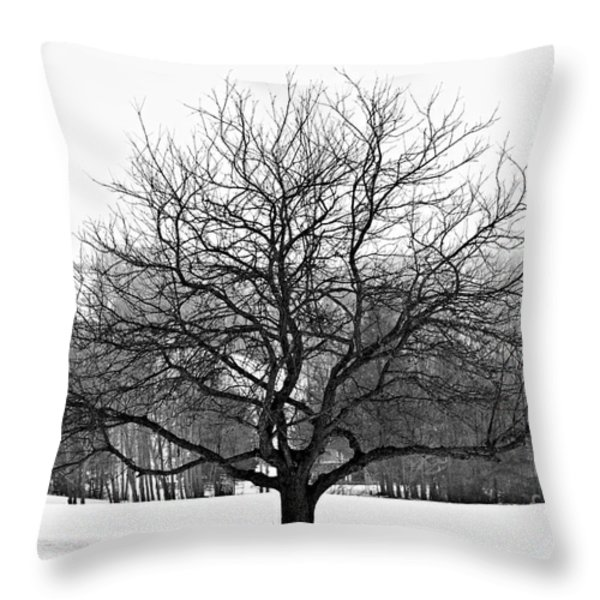 Apple Tree In Winter Throw Pillow by Elena Elisseeva