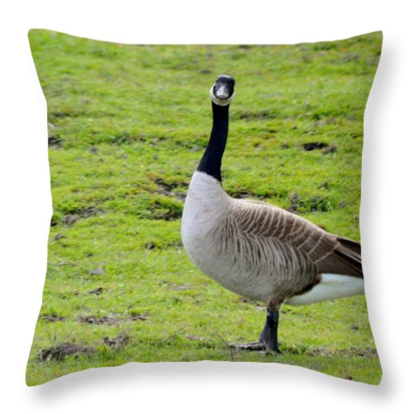 Are You Talking To Me Throw Pillow by Barbara Snyder