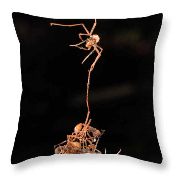 Army Ants Building Bivouac Throw Pillow by Mark Moffett